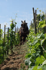 Vin et Terroir